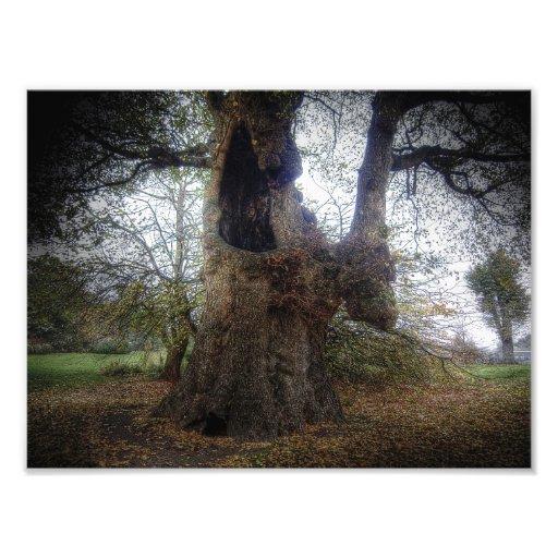 Árbol fantasmagórico fotografías