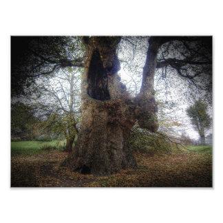 Árbol fantasmagórico impresiones fotográficas