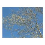 Árbol, flor, tropical, fotografía postales