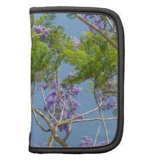 árbol florecido púrpura del jacaranda contra el ci organizador