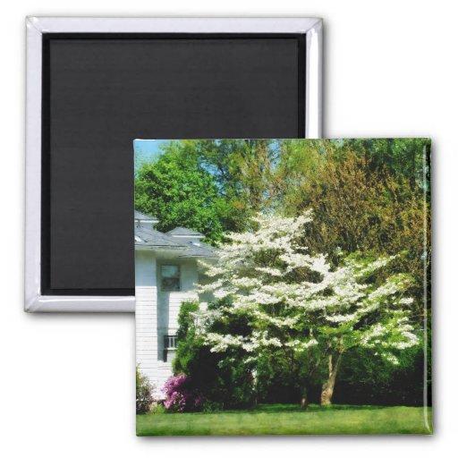Árbol floreciente blanco imán para frigorifico