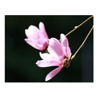 Árbol floreciente, en foco postales