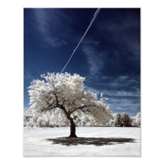 Árbol floreciente en infrarrojo en los jardines bo arte fotográfico