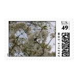 árbol floreciente franqueo