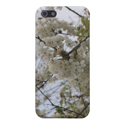 árbol floreciente iPhone 5 cárcasas