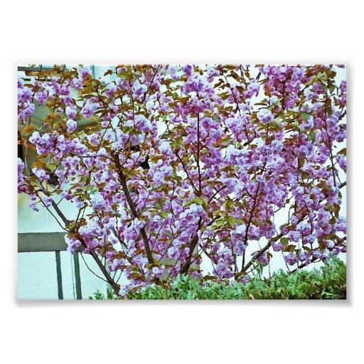 Árbol floreciente rosado en Francia Fotografías
