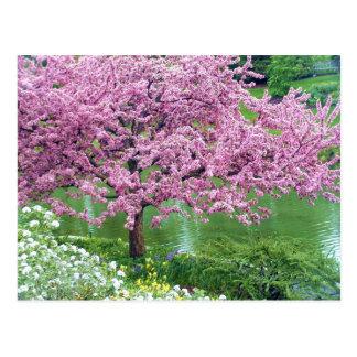 Árbol floreciente sobre el agua postal