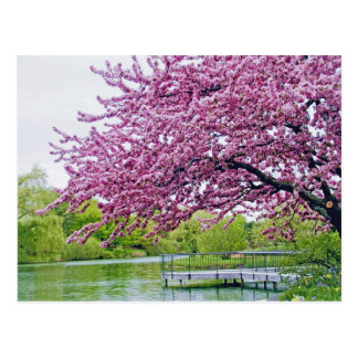 Árbol floreciente sobre laguna tarjeta postal