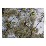 árbol floreciente tarjeta