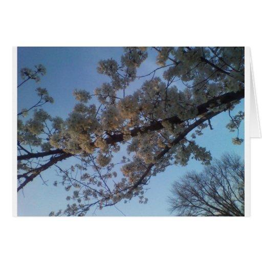 Árbol floreciente tarjetón