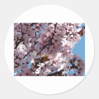 árbol flores rosados en árbol etiquetas redondas