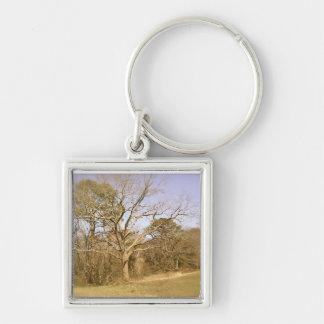 Árbol frecuentado viejo llaveros