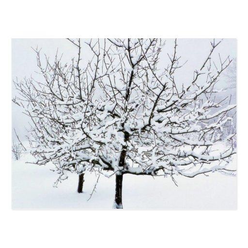 Árbol frutal en ropa del invierno tarjeta postal