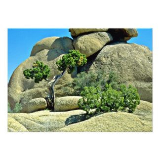 Árbol Gnarled, arbustos entre los cantos rodados Invitaciones Personales