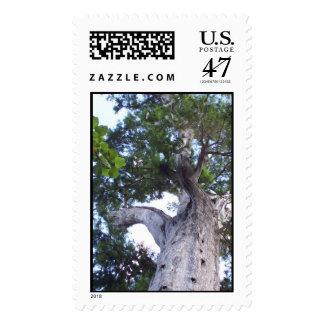 Árbol grande sellos