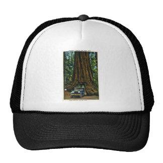 Árbol grande Wawona arboleda de Mariposa CA Gorras De Camionero