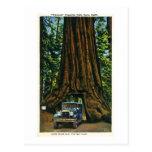 Árbol grande Wawona, arboleda de Mariposa, CA Tarjetas Postales