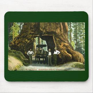 Árbol grande Wawona, arboleda de Mariposa, vintage Alfombrillas De Raton