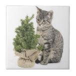 Árbol gris del verde del gatito teja  ceramica