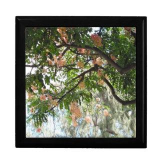 árbol Hawai i de la ducha Cajas De Recuerdo
