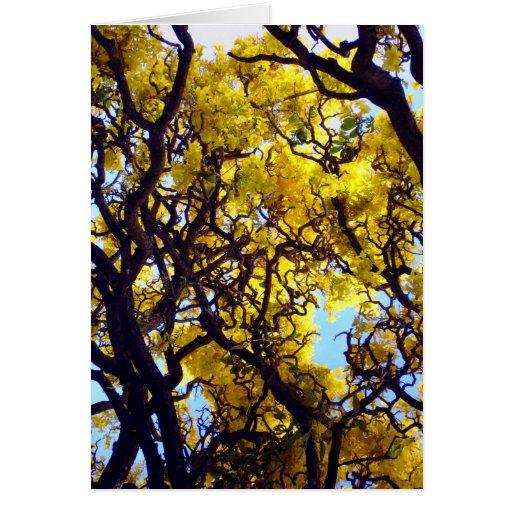 Árbol hawaiano del oro tarjeta de felicitación