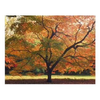 Árbol hermoso de la caída tarjetas postales
