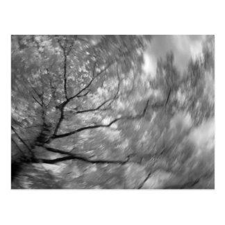 árbol infrarrojo postales
