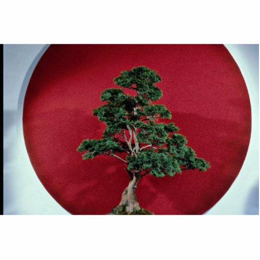 Árbol inspirador de los bonsais fotoescultura vertical