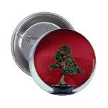 Árbol inspirador de los bonsais pins