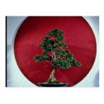 Árbol inspirador de los bonsais postales