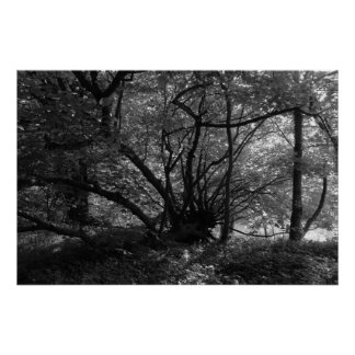 Árbol inusual, parque del Bute, Cardiff, País de G Impresiones