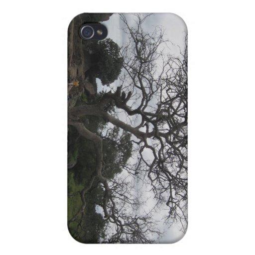 Árbol iPhone 4 Carcasas