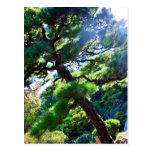 Árbol japonés del jardín de té de la postal