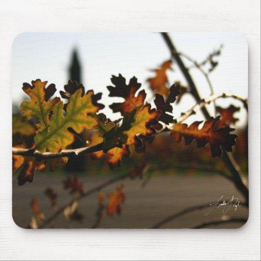 Árbol joven de Nouveau del arte Alfombrillas De Raton