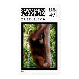 Árbol lindo Hugger Borneo del bebé Timbre Postal