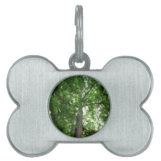 Árbol majestuoso placa de nombre de mascota