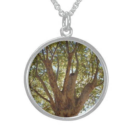 Árbol masivo con el cielo azul collar de plata esterlina