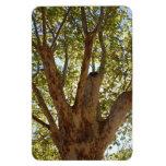 Árbol masivo con el cielo azul imanes flexibles