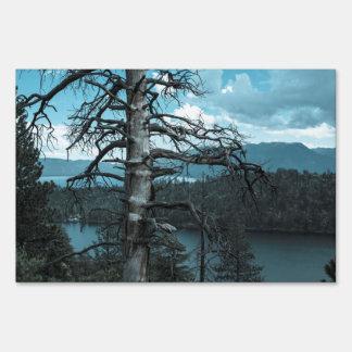 Árbol muerto en el lago Tahoe Señal