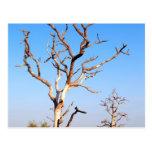 árbol muerto en granja postal