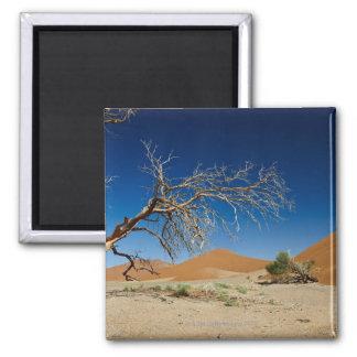 árbol muerto en la duna 45 en paisaje del desierto imán cuadrado