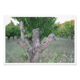Árbol muerto en la garriga cojinete