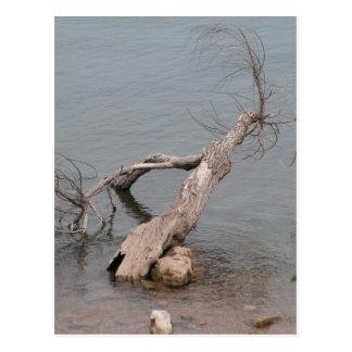 Árbol muerto en la roca de la tabla postal