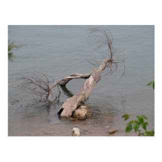 Árbol muerto en la roca de la tabla tarjetas postales