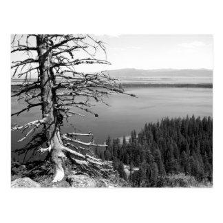 Árbol muerto, lago jenny, Teton magnífico, Wyoming Postal