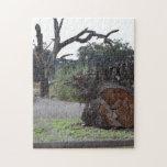 Árbol muerto rompecabezas con fotos