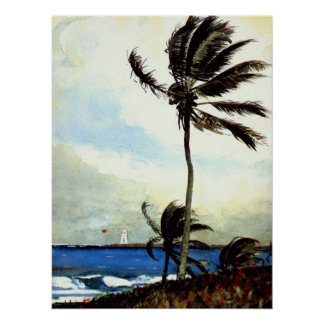 """Árbol-Nassau' de la palma Póster"
