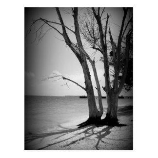 Árbol negro por el mar postal