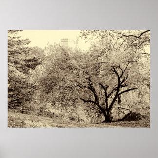 Árbol negro y blanco del invierno del paisaje en posters