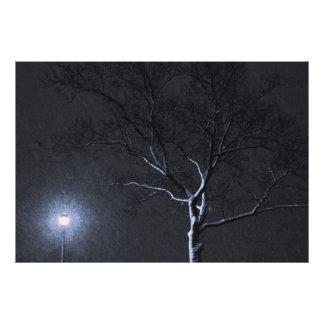 Árbol negro y blanco del invierno del paisaje en p fotografías